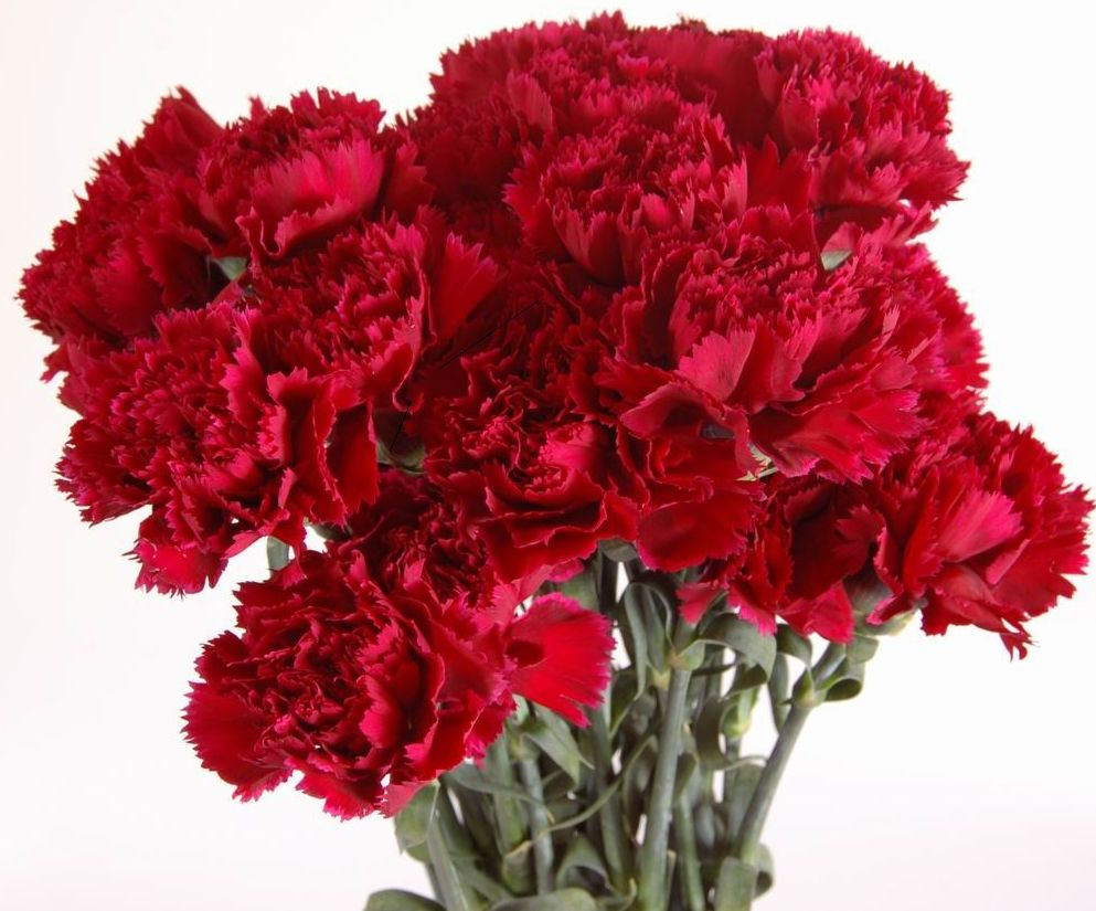 carnations for funeral